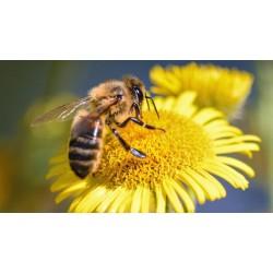 Historia de una abeja