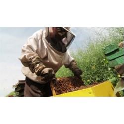 Beneficios de los productos de colmena
